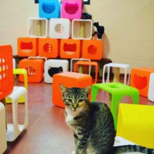Kitty Kasas animal shelter